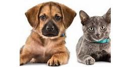 Produse, Instrumentar & Aparatura Veterinara | Gard Electric | Crotalii Animale - Reguli de calatorie cu animalele de companie