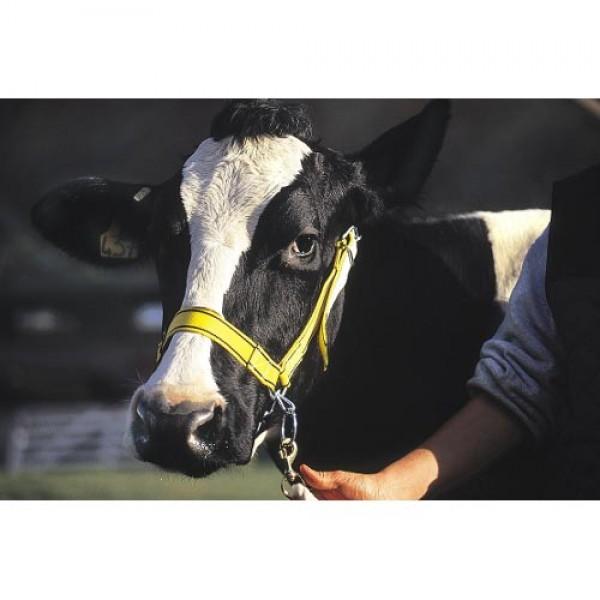 Produse, Instrumentar & Aparatura Veterinara   Gard Electric   Crotalii Animale -Capastru vaca (expo) G/N