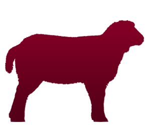 Produse, Instrumentar & Aparatura Veterinara | Gard Electric | Crotalii Animale - Ovine