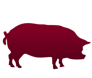 Produse, Instrumentar & Aparatura Veterinara | Gard Electric | Crotalii Animale - Suine